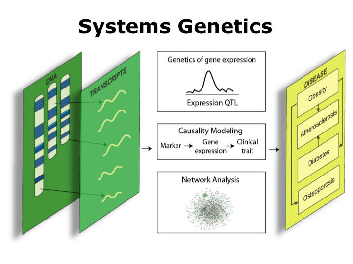 identify the potential impact of genetic Discover the many important advantages and disadvantages of genetic engineering.
