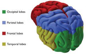 3d-brain