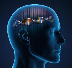 Scientists identify genes linked to human intelligence