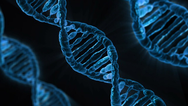 Neuron type-specific gene loss linked to Angelman syndrome seizures