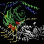 gnb1-protein