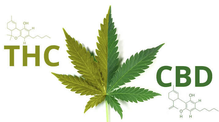 Orally Administered CBD May be Converted to THC in the Gut