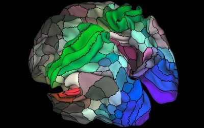 New Brain Map Charts Fresh Territory