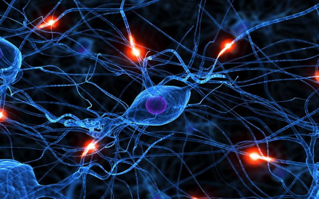 Researchers discover network of neural regions involved in spread of seizures