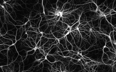 New study pinpoints individual neurons in the brain that support observational learning