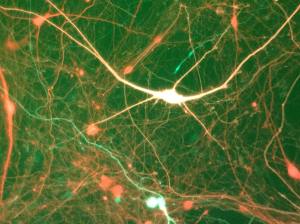 Neurons-ThompsonGeorge