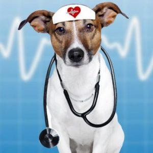 doctordog2-405x405
