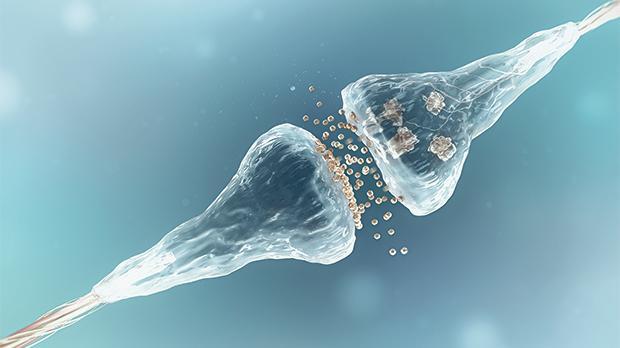 Brain's 'natural marijuana' may fight epilepsy, Malta researchers find