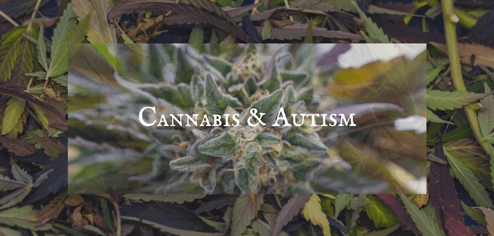 New Research Into the Effectiveness of Cannabis for Autism