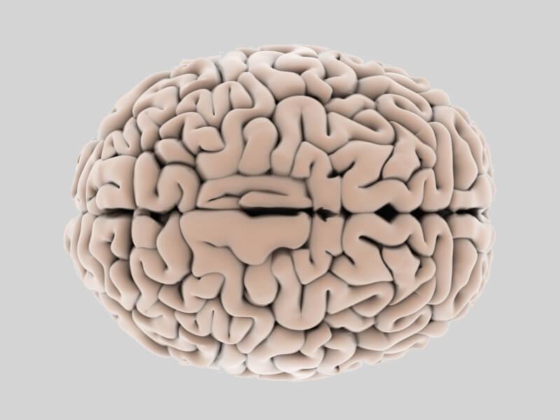 Brain folding sheds light on neurological diseases, researchers find