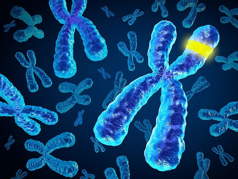 Researchers move closer to solving puzzle of 15q13.3 microdeletion syndrome