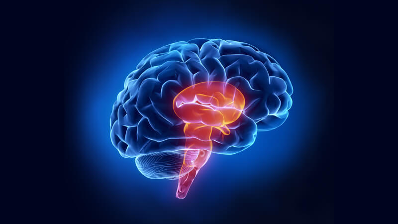 Research reveals underappreciated role of brainstem in epilepsy