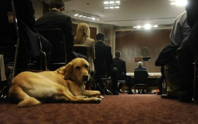 Beyond the basics: How to accommodate workers with service animals
