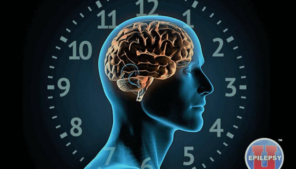Circadian and circaseptan rhythms in human epilepsy