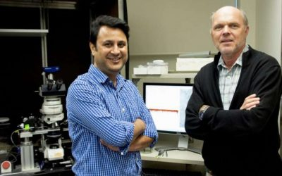 Scientists solve century-old neuroscience mystery—answers may lead to epilepsy treatment
