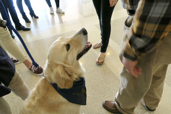Everything You Need to Know About Seizure Response Dogs